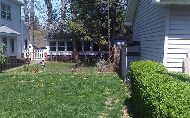 backyard-before
