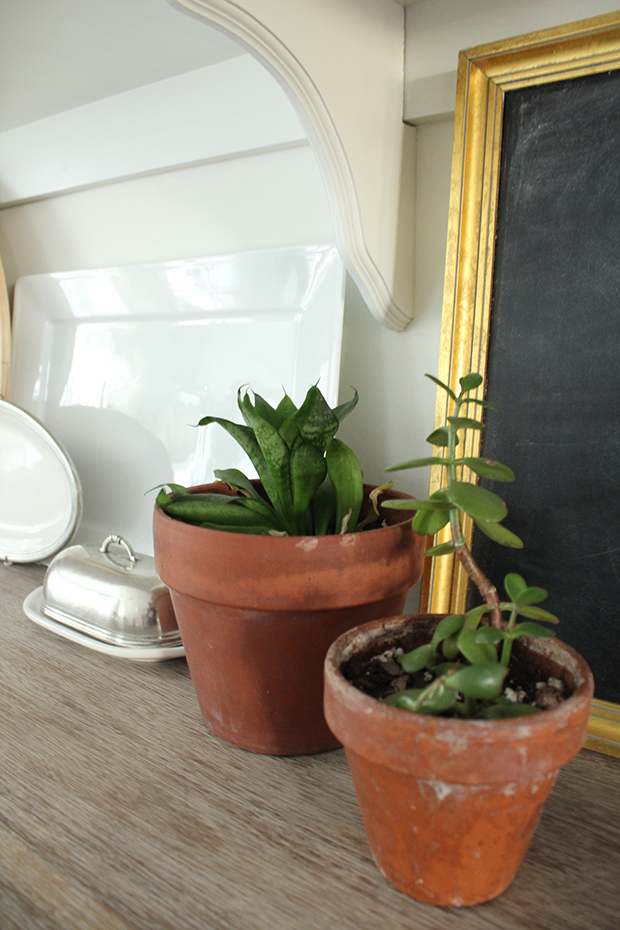 raised by design - kitchen shelves - houseplants